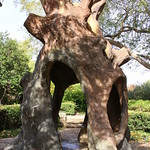 Crystal Shrine Grotto: Abraham's Oak thumbnail