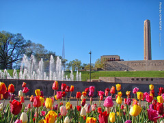 Tulips and Fountain in KC, 19 Apr 2019 (photography.by.ROEVER) Tags: kc kcmo kansascity kansascitymo kansascitymissouri missouri 2019 morning bluesky flower flowers tulip tulips fountain fountains henryblochfountain pershingroad libertymemorial unionstation usa