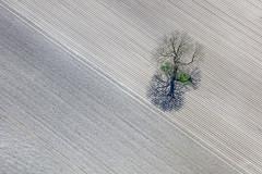 Tree On Farmland (Aerial Photography) Tags: by m obb 19042019 5sr57927 acker ackerbau baum bavaria bayern braun bäume deutschland diagonale einsamkeit einzelbaum farbe feld feldgehölz fotoklausleidorfwwwleidorfde fotoklausleidorfwwwleidorfaerialcom germany grafik grau grün ismaning landscapeandnature landschaft landschaftnatur landwirtschaft laubbaum linien luftaufnahme luftbild p1 schatten schwarz aerial agriculture black brown color colour deciduoustree diagonal field foliagetree graphicart graphics green grey landscape landscapenature leaftree lines loneliness nature negro outdoor shade shades shadow shadows singletree tree trees verde ismaninglkrmünchen bayernbavaria deutschlandgermany