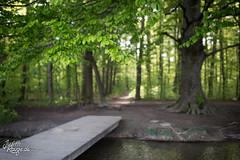 Silence (judithrouge) Tags: germany deutschland augsburg wald forest bridge brücke bach stream tree baum beech wood buche green grün ufer bank
