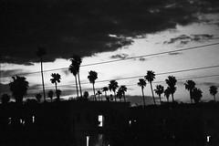 Los Angeles 8 (Lennart Arendes) Tags: canon eos 1n 24 105 mm f4 film analog kodak trix 400 black white los angeles hollywood sunset boulevard evening little armenia buildings light palm tree plants clouds shadow