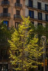 beautiful!  Barcelona, Catalonia, ES (andrey.salikov) Tags: barcelona city colour beautiful spring fantastic spain europe foto gorgeous free atmosphere catalonia april colourful magnifique atrevida buenisima fantasticcolors nikond60 dreamscene goodatmosphere fantasticplaces colourfulplaces 180550mmf3556 balticlights harmonyday2018 trip travel light tourism wonderful photo nice streetlight scenery mood places sensual stunning lovely impressive lettland ottimo весна niceday апрель чудесно niceplace отпуск niceimage peacefulmind moodshot туризм испания каталония барселона relaxart superbshots sensualstreet harmonyvision es 2019 жж