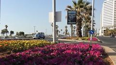 Tel Aviv (unicorn7unicorn) Tags: тельавив цветы улица дом дерево пальмы telaviv colorfulnature 365the2019edition 3652019 day135365 15may19