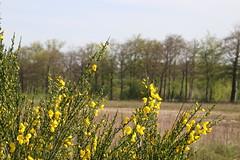 IMG_0409 (picolo_rasco@hotmail.com) Tags: nature fauna flora damme belgium