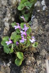 IMG_0374 (picolo_rasco@hotmail.com) Tags: nature fauna flora damme belgium