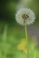 IMG_0365 (picolo_rasco@hotmail.com) Tags: nature fauna flora damme belgium