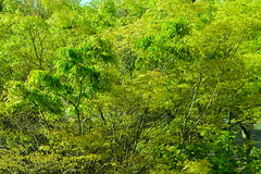 Springtime (Ken Pick) Tags: 119picturesin2019 green unitedstates kirkland washington acidgreen