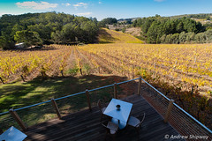 Mount Lofty Ranges Vineyard, Lenswood, SA. (andrew52010) Tags: vineyard lenswood restaurant adelaidehills mountlortyrangesvineyard vineyards mountloftyranges southaustralia adelaide winery australia
