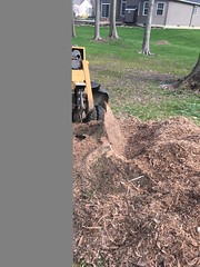 E0364E24-E80C-4FE9-A821-6AC79613AC56 (Lakeview Stump Grinding) Tags: lakeview columbia strongsville stump grinding ohio station north royalton cleveland berea olmsted falls landscaping bay village northeast service grind removal