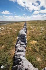 Out of sight (Ben Mouleyre Photographie) Tags: ireland irlande burren wild wildatlanticway landscape paysage canon canonfrance sauvage immensité horizon mur wall stone