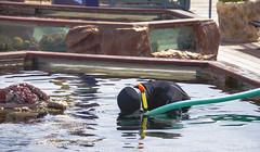 (Cindy en Israel) Tags: trabajador trabajo buzo robado cándida candid persona agua piletón caño eilat israel acuario travel turismo tour paseo viaje