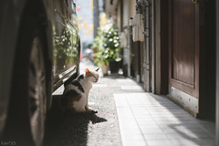 猫 (fumi*23) Tags: ilce7rm3 sony street sel55f18z a7r3 animal alley bokeh dof katze emount gato cat chat neko ねこ 猫 ソニー
