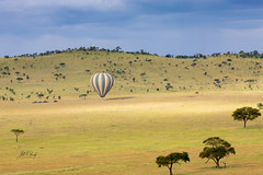 Landing in the Serengeti (Jill Clardy) Tags: africa tanzania vantagetravel safari 201902234b4a1227 balloon landing savanna plains morning golden light aura acacia trees serengeti national park