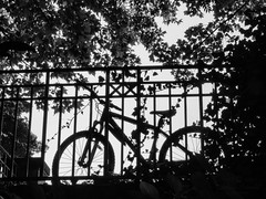 Cycling- (Schnell Sabine Photography) Tags: bicycle silhuette tree munich blackandwhite