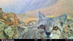 2da gato - 5