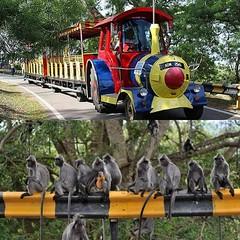 Kuala Selangor V3 Homestay@ ArtHomer, Kuala Selangor: mulai Rp 1,666,000* / malam (VLITORG) Tags: homestay di kuala selangor