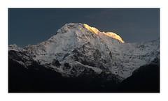 Annapurna South First Light (SiKenyonImages) Tags: annapurna south himalayas nepal mountain annapurnasouth annapurnamasif landruk worldexpeditions firstlight sunrise namaste