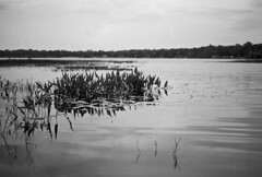 Morning, Swan Lake (PositiveAboutNegatives) Tags: leica leicaflex slr leicaflexsl leitz 50mm 50mmsummicron bw film analog blackandwhitefilm foma fomapan fomapan100 rodinal 150 coolscan swanlake melrose florida