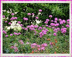 Spring flowers (NancySmith133) Tags: springflowers springingodsgarden frontyardgardens centralfloridausa