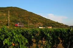 La belle rouge pour Valenton (railmax07) Tags: train ferroviaire gervans avignon perpignan valenton vigne fret sncf corail multiservices bb26000 novatrans conteneurs