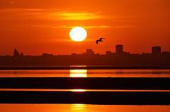 DAK02893, 03-49-18 (dima.kazan) Tags: казань волга верхнийуслон студенец снтвесна рассвет ночь птица чайка