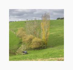 Trees on the farm (jen 3163 (mostly off for a few weeks)) Tags: farm dairy trees autumn gippsland victoria australia