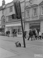 dOXg (||danieleph||) Tags: mamiya mediumformat 120mm ilford filmphotography film ishootfilm blackandwhite 645m oxford uk streetphotography street analog de