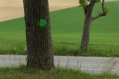 IV.2019 (David Farreny) Tags: france arbres trees troncs trunks route road bitume blacktop asphalte asphalt herbe grass champs fields vert green point dot peinture paint feuilles leaves feuillage foliage blé corn campagne countryside écorce bark