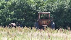 Traktorer-0176 (Kenneth Gerlach) Tags: haslev tractor traktor