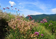 in nature (majka44) Tags: nature green flower hill landscape forest grass light view sky