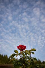 20190515A73_8121 (Gansan00) Tags: ilce7m3 α7ⅲ sony zeiss japan 山口県 yamaguchi 日本 landscape snaps ブラリ旅 中須棚田 棚田 shunan nature 5月 fe35mmf28 夕景 夕陽 sunset
