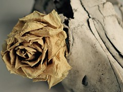 118/368 (MairéadNiRodaigh) Tags: skull faded rose macromondays eyeofthebeholder