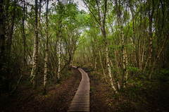 path through trees (Glen Parry Photography) Tags: glenparryphotography landscape anglesea d7000 landscapephotography nikon nikond7000 nikonphotographer nikonphotography sigma sigma1020mm wales ynysmon path walking hiking fore wood