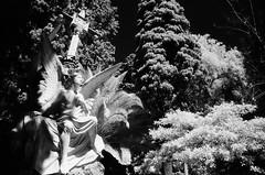 (Sergi Escribano) Tags: sergiescribano infraredfilm film sfx ilfordsfx200 documentaryphotography doubleexposureonfilm barcelona blancoynegro barcelonastreetphotography cemetery analog analoguefilmproject analogue analoguephotography architecture filmsnotdead fm2 filmisnotdead monochrome monocromático blackandwhite ilford
