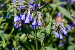 IMG_1250_ (n_kot) Tags: arboretum wojsławice dolnośląskie kwiaty roośliny spring wiosenne wiosna