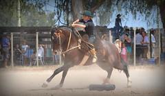 Synthia Schuster (Eduardo Amorim) Tags: gaúcha gaúchas gaucha gauchas mulher mujer woman femme donna pampa campanha fronteira jaguarão riograndedosul brésil brasil sudamérica südamerika suramérica américadosul southamerica amériquedusud americameridionale américadelsur americadelsud brazil eduardoamorim cavalos caballos horses chevaux cavalli pferde caballo horse cheval cavallo pferd crioulo criollo crioulos criollos cavalocrioulo cavaloscrioulos caballocriollo caballoscriollos