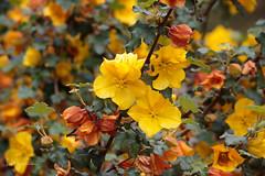 Beautiful flowering bush... (Lisa Roeder) Tags: flowers