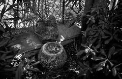 Le coin des reliques... (woltarise) Tags: marseille reliques jardin enchanteur merveilleux nature sauvage france yashicat4super film argentique ilford fp4 100