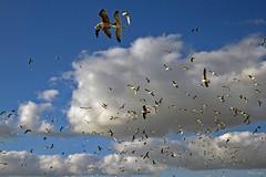 Núvens e outras vidas... (Zéza Lemos) Tags: algarve água natureza natur nuvens núvens natural canon capture céu ciel gaivotas portugal pássaros pássaro faro vilamoura quarteira