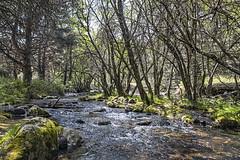 Río de la Angostura (lebeauserge.es) Tags: rascafría madrid españa naturaleza árbol río agua cielo nubes