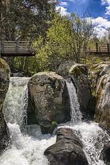 Sortendo piedras (2) (lebeauserge.es) Tags: rascafría madrid españa naturaleza árbol río agua catarata cascada