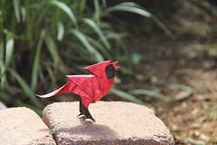 Origami Singing Cardinal (Sasha CraftSpace) Tags: origami fold nature outdoors photo cardinal singing