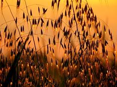 IMG_0066x (gzammarchi) Tags: italia paesaggio natura pianura campagna ravenna villanovadiravenna tramonto erba riflesso monocrome
