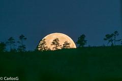 Selene Acostándose / moonset (Gogolac) Tags: lavega location luna astrophotography republicadominicana moon moonset moonseting lunallena astrofotografia photopills