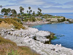 La Jolla/ San Diego, California. (glenn2meyer) Tags: san diego california beach cove la jolla pacific travel ocean scenic vacation leisure sea lions sky clouds palm trees colorful cormorants rocks cliff sony cybershot