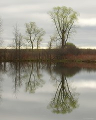 Mac Johnson Trees (S. J. Coates Images) Tags: mac johnson wildlife area brockville water reflections trees