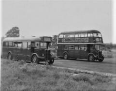 London transport T794 and RT4193 Grays 1954. (Ledlon89) Tags: aec regal regent t rt bus buses lt lte londontransport 1954 londonbus londonbuses
