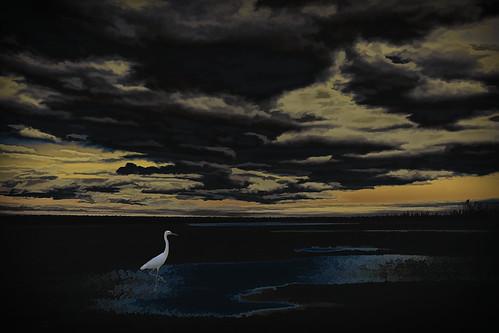 The Sunset Bird