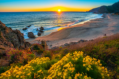 Malibu Beach PCH Wildflower Superbloom Sunset Sycamore Beach Point Mugu! Sony A7RII Sony FE 16-35mm f/2.8 GM Lens Gmaster Lens! California Wildflowers Superbloom Fine Art Photography! Elliot McGucken Fine Art Landscape & Nature Photography! (45SURF Hero's Odyssey Mythology Landscapes & Godde) Tags: malibu beach pch wildflower superbloom sunset sycamore point mugu sony a7rii fe 1635mm f28 gm lens gmaster california wildflowers fine art photography elliot mcgucken landscape nature