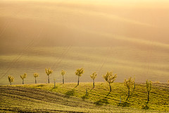 Wall of Light (Andrew G Robertson) Tags: south moravia czechia czech republic kyjov sunrise dawn haze